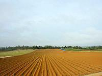 南大東島の南大東島西側の道 - この畑の様子も大東島ならではかも