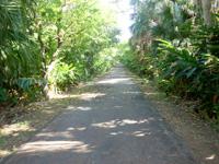 南大東島のフロンティアロード - 森の中を通る雰囲気
