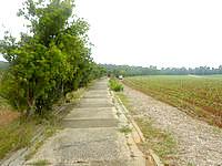 南大東島のフロンティアロード - すぐ横が畑の場所もある