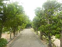 南大東島のフロンティアロード - 基本的に並木道です