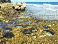 南大東島の本場海岸 - ポットホールがあります