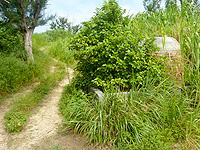 水納島の旧焼却炉 - 時期によっては雑草で存在感がないかも