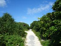 宮古島の与那覇前浜 - ビーチに沿って遊歩道もあります
