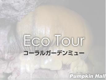 宮古島のコーラルガーデンガイド ミュー「保良泉パンプキンホールのツアーです」