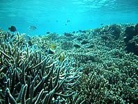 シギラの海の中
