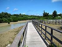 宮古島「島尻のマングローブ林」