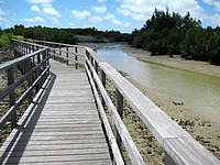 宮古島の島尻のマングローブ林 - 遊歩道がしっかり整備されています
