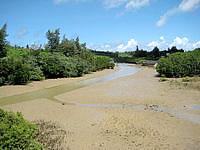 宮古島の島尻のマングローブ林 - 山や川の無い宮古島では珍しいマングローブ
