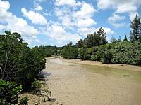 宮古島の島尻のマングローブ林 - 西表島の面影を少しだけ感じられます