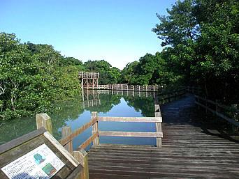 宮古島の川満のマングローブ/ウプカーマングローブ遊歩道「国道390号線のすぐ近くにあります」