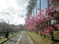 那覇の与儀公園/桜の名所 - 公園内の遊歩道