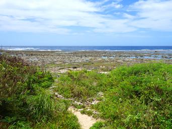 大度海岸の穴場の入口