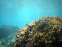 大度海岸/ジョン万ビーチの海の中/珊瑚礁/熱帯魚