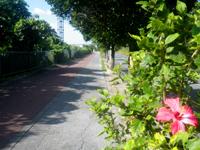 南部のグスクロード/グスクロード公園 - グスクロードには遊歩道があって散歩もジョギングも快適