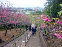 南部の八重瀬公園/八重瀬岳 - 階段からの景色は桜の時期以外でも絶景