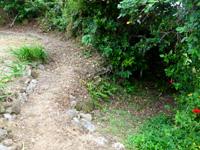 大神島のプナイパーの浜への道 - 途中右への脇道がありますがその先は拝所