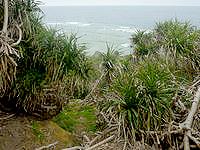 大神島のプナイパーの浜への道 - 草むらを越えればこんな感じかも?