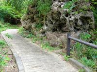 大神島の大神島横断 遊歩道西側 - 序盤は上りやすい