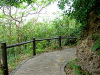 大神島の大神島横断 遊歩道西側 - 中盤はうっそうとした森の中の雰囲気
