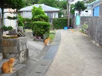 大神島の大神集落/大神島離島振興コミュニティセンター - とにかく猫(野良猫)が多かった