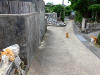 大神島の大神集落/大神島離島振興コミュニティセンター - 何故か茶色系の野良猫が多かった