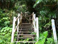 大神島の遠見台への道 - これが本当の遠見台への入口
