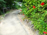 大神島の大神島横断 遊歩道東側 - 集落の端っこには東側同様にハイビスカスの花