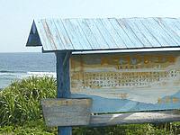 沖永良部島のハマユウ群生地の写真