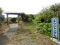 沖永良部島のソテツジャングル