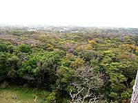 沖永良部島の大山植物公園展望台の写真