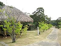 沖永良部島の大山野営場/ふれあいの森