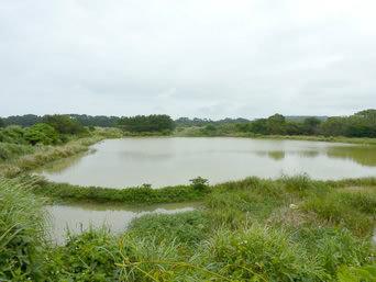 沖永良部島の松の前池(ため池百選)「ため池百選らしいですがピンと来ない光景」