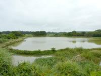 沖永良部島の松の前池(ため池百選)