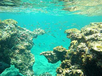 瀬底島の瀬底ビーチのアウトリーフ「アウトリーフは流れが急で、かなり危険!」