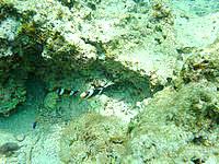 瀬底ビーチのアウトリーフ