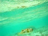 瀬底ビーチのインリーフ