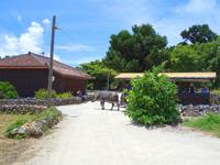 竹富島の竹富の集落の道 - 水牛車が通る場合は止まってやり過ごしましょう