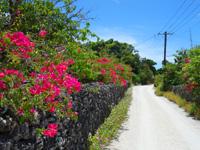 竹富島の竹富の集落の道 - 松竹荘やマキ荘近くの道も花盛りでおすすめ