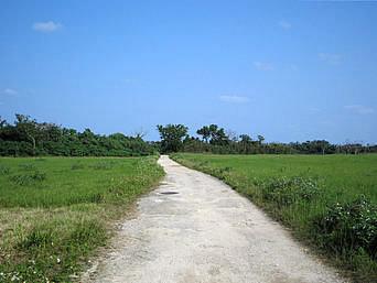 アイヤル浜への道