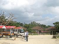 竹富島の新田観光(水牛車)