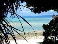竹富島の星砂の浜 - 林越しに見るのが定番の光景