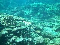 ウプドゥーの海の中