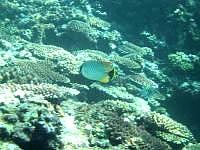 多良間島のウプドゥーの海の中 - 魚もいろいろ見れました