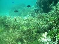 多良間島のトゥガリ゜ラの海の中 - 珊瑚礁は・・・いまいちです