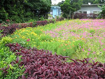 多良間集落/お花畑