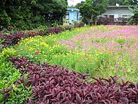 多良間島の集落のお花畑