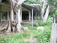 多良間島の土原ウガン/ウガム゜/植物群落