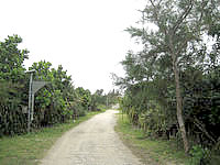 多良間島の宮古市の森 - このまま進むとゆがぷうランド公園へ