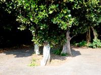 多良間島のパナリの拝所 - 周回道路には案内表示もあります