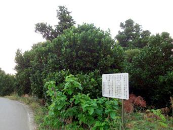 塩川御嶽のフクギ並木